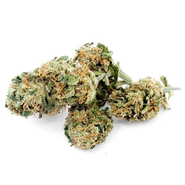 CBD Wholesale Terms And Conditions